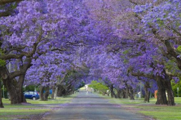 Γκράφτον- Αυστραλία