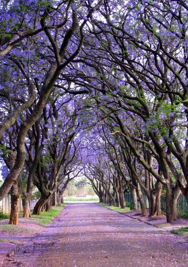 Κούλιναν- Nότια Αφρική