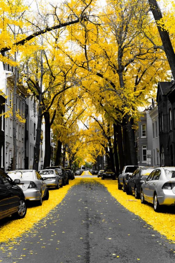 Ουάσινγκτον- Η.Π.Α.
