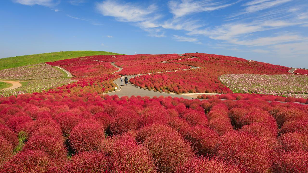 10-Hitachi Seaside Park, Ιαπωνία