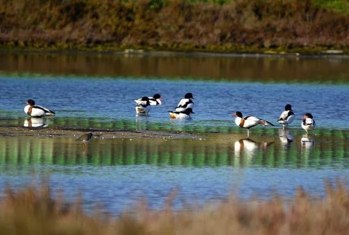 Λιμνοθάλασσα Ωρωπού: Ένας άγνωστος υγροβιότοπος γεμάτος φλαμίνγκο