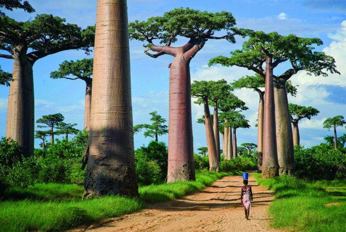 Μενάμπε, Μαδαγασκάρη