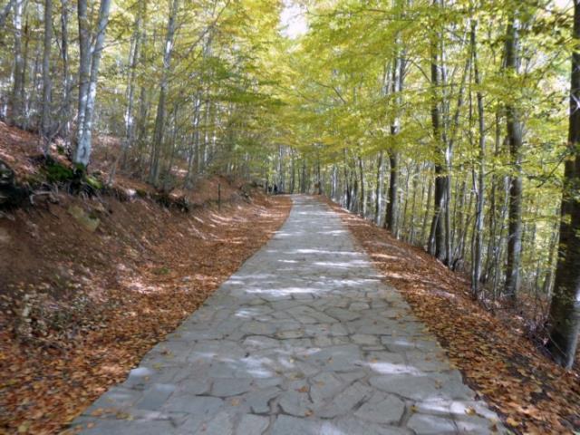Νυμφαίο δάσος