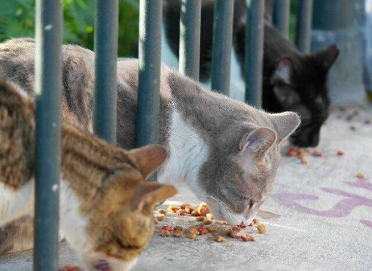 Αιγάλεω: Απερίσκεπτοι άγνωστοι δηλητηρίασαν 11 αδέσποτες γάτες