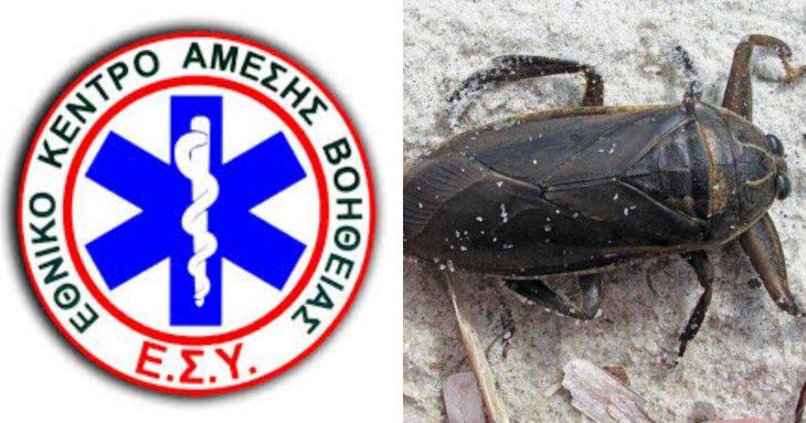 Ελλάδα δηλητηριώδες σκαθάρι: Συναγερμός για το επικίνδυνο έντομο