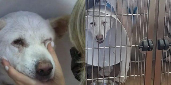 Νίκαια καθηγητής: Δικαιολογίες από τον δράστη που μαχαίρωσε το σκυλί