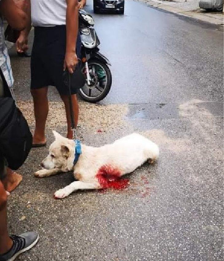 Νίκαια σκυλάκι: Ελάχιστες οι ελπίδες για το σκυλάκι που μαχαιρώθηκε