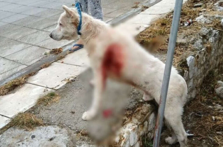 Κούγιας για βασανιστή σκύλου: «Αρνήθηκα να τον υπερασπιστώ»