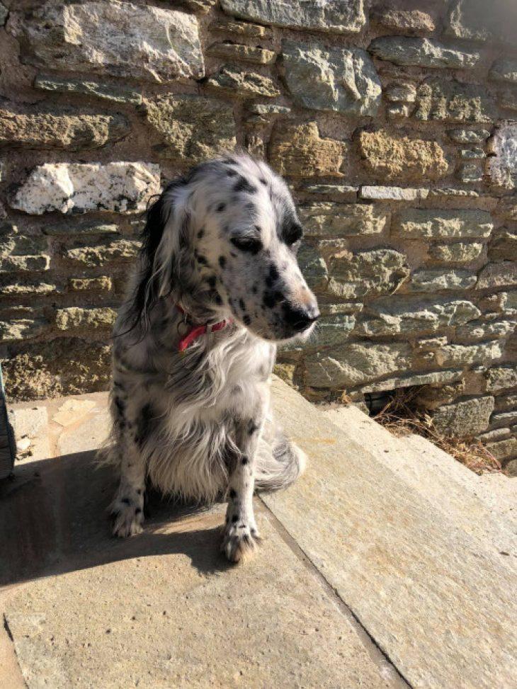 Έκκληση στην Τήνο: Χάθηκε σκυλάκι συντροφιάς - Πώς να βοηθήσετε