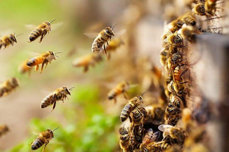 Ζάκυνθος: 48χρονος άνδρας σκοτώθηκε από επίθεση μελισσών