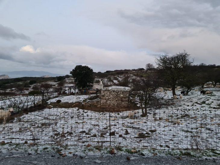 Χιόνια στην Ελλάδα: Έπεσαν τα πρώτα χιόνια σε Νάξο, Φλώρινα και Λάρισα – Δείτε φωτογραφίες