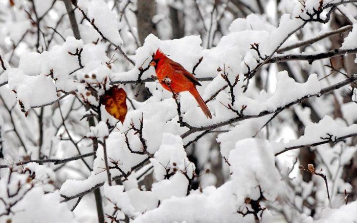 Κακοκαιρία: Χιονιάς θα έρθει στη χώρα τις επόμενες μέρες - Δείτε τον καιρό