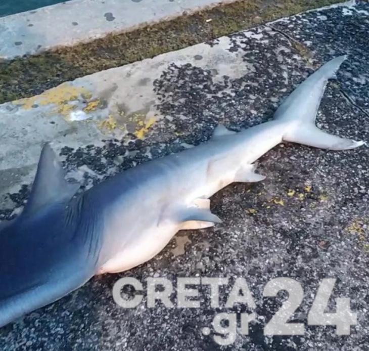 Λιμάνι Ηρακλείου: Ξεβράστηκε καρχαρίας στα ρηχά του λιμανιού