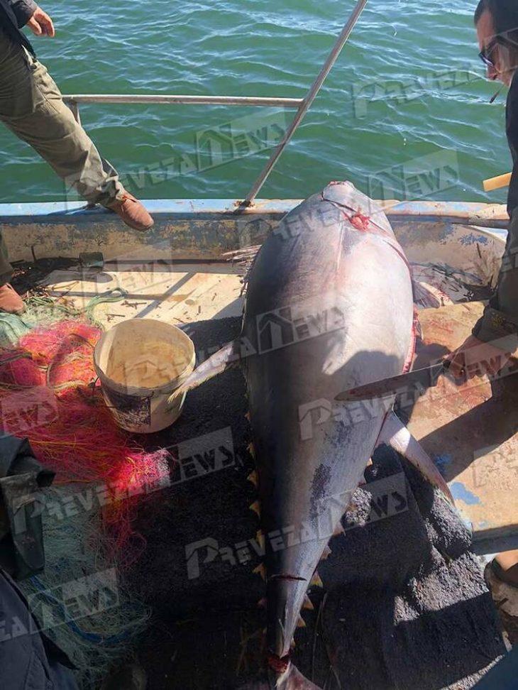 Πρέβεζα: Γιγαντιαίο ψάρι 130 κιλών έπιασαν ψαράδες που δεν πίστευαν στα μάτια τους- Τι ψάρι είναι