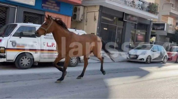 Λάρισα σοκ: Άλογο έκανε τις βόλτες του στο κέντρο της πόλης