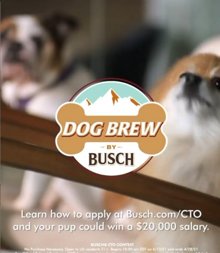 Μπύρα για σκύλους: Εταιρεία δίνει μισθό 20.000$ σε δοκιμαστές σκύλων