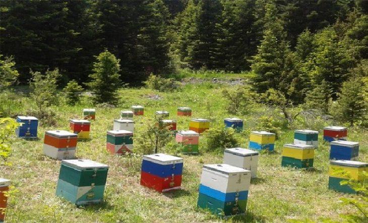 Θεσσαλονίκη κλοπή: 68χρονος έκλεψε συνολικά 47 κυψέλες μελισσών