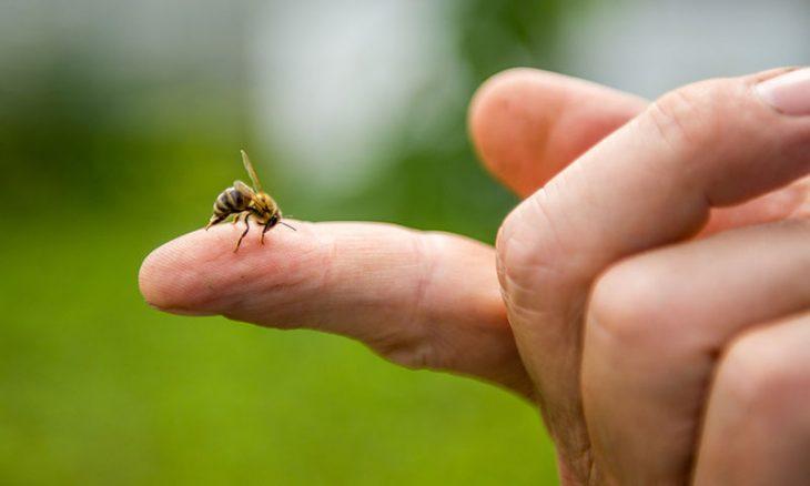 Άρτα: 75χρονος έπαθε καρδιακή ανακοπή από τσίμπημα μέλισσας