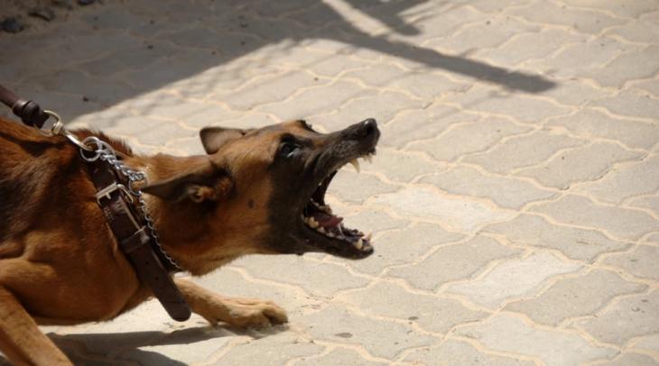 Σοκ στην Κόρινθο: Σκύλος δάγκωσε στο πρόσωπο ένα 8χρονο αγόρι