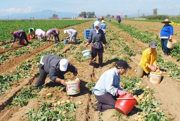Δουλειά στα χωράφια: Ντροπή είναι τα επιδόματα και όχι η δουλειά