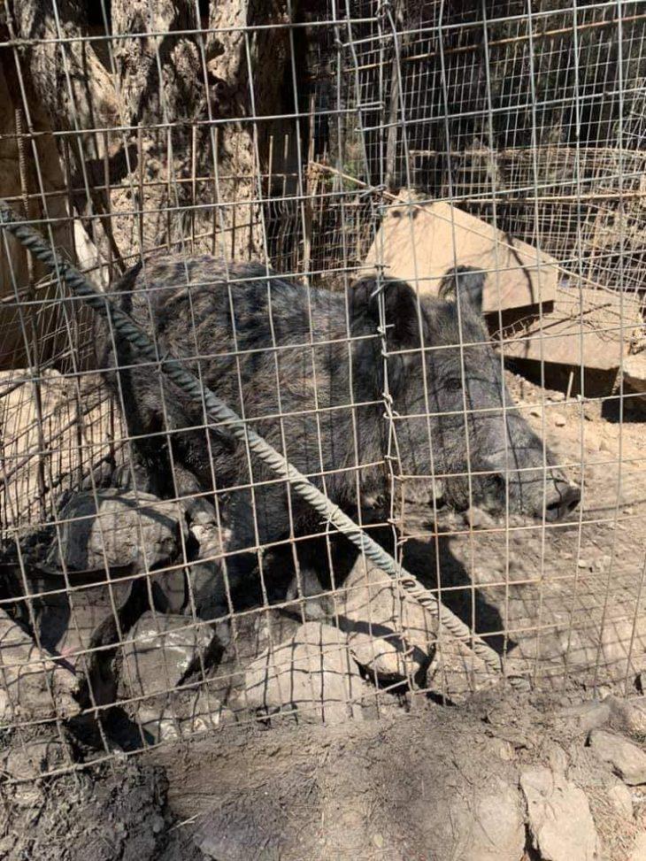 """""""Ευτυχώς στη φωτιά δεν είχαμε θύματα"""": Το βλέμμα του καμένου αυτού σκύλου απαντάει σε όσους το ισχυρίζονται αυτό"""