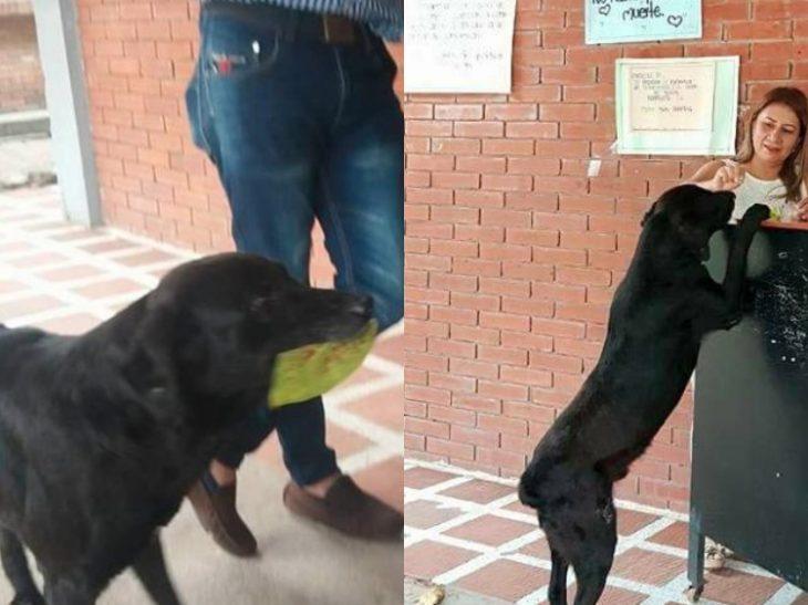 Negro: Ο φοβερός σκύλος που αγοράζει κουλουράκια και πληρώνει με φύλλα δέντρου