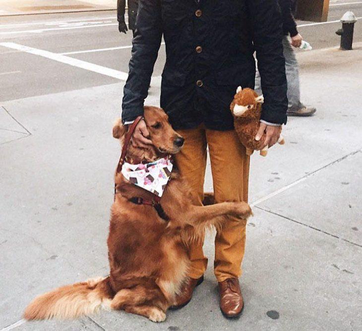 Αγκαλίτσας σκύλος δίνει αγάπη στους περαστικούς με αγκαλιές