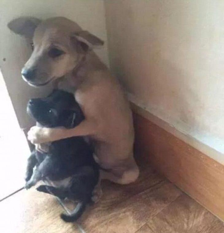 Αδέσποτος σκύλος αγκαλιάζει το φίλο του που σώθηκε