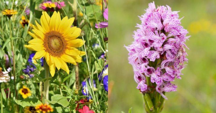 Αγρότες :Χρησιμοποιούν λουλούδια αντί για χημικά