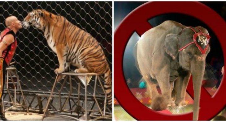 Καλιφόρνια: Απαγόρευσε τα σόου με άγρια ζώα σε τσίρκο