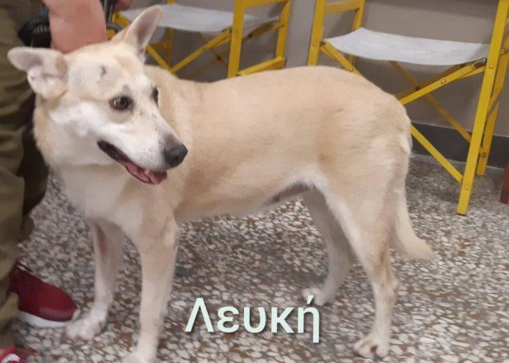 Πράξη αγάπης από τον Κινηματογράφο Παναθήναια, που φιλοξενεί αδέσποτα σκυλάκια μέχρι να βρουν σπίτι