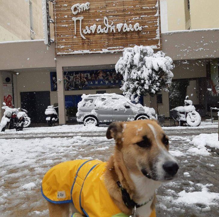 Κινηματογράφος Παναθήναια: Φιλοξενεί αδέσποτα σκυλάκια μέχρι να βρουν σπίτι