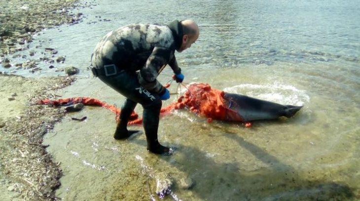 Χρήστος Λάμπρου: Έσωσε φώκια από βέβαιο θάνατο