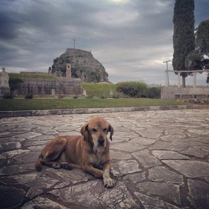 Σκύλος Κανέλος: Πέθανε ο γνωστός αδέσποτος της Κέρκυρας