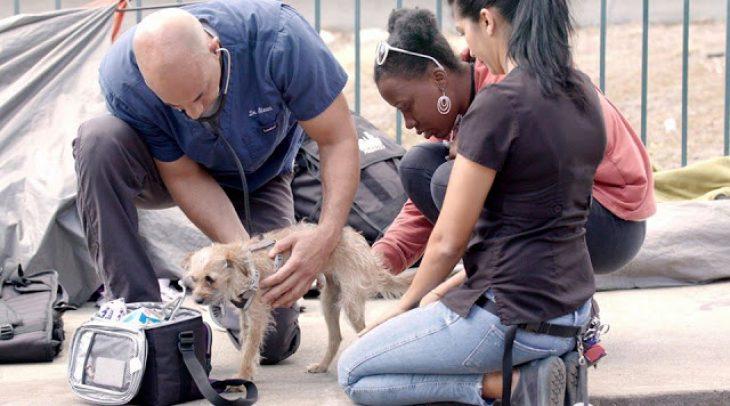 Κτηνίατρος εξετάζει εντελώς δωρεάν αδέσποτα ζώα.