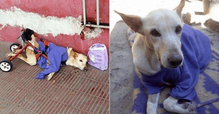 Ανάπηρος σκύλος: Τον παράτησαν με χαλασμένο καροτσάκι και ένα κουτί πάνες