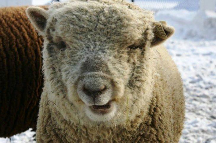 Ζώα με Σύνδρομο Down: Σπάνια ομορφιά μέσα από 15 φωτογραφίες