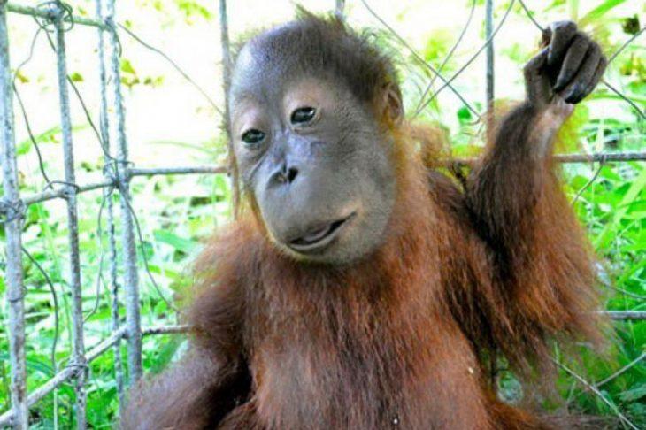 Ζώα με Σύνδρομο Down: Η σπάνια ομορφιά τους μέσα από 15 πανέμορφες φωτογραφίες