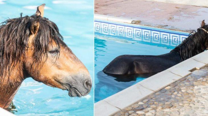 Κεφαλονιά: Άλογο βούτηξε σε πισίνα ξενοδοχείου
