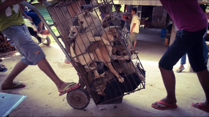 Αληθινός ήρωας: Ο άντρας που έσωσε 1.000 σκυλιά στην Κίνα
