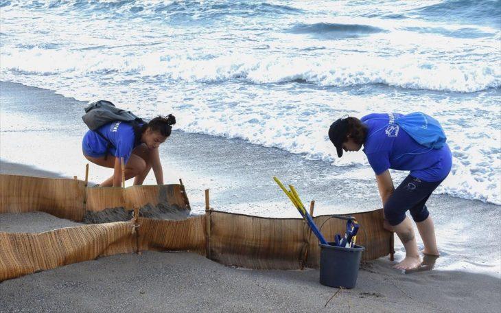 Καρέτα - Καρέτα: Άφησε τα αυγά της σε παραλία στη Λούτσα