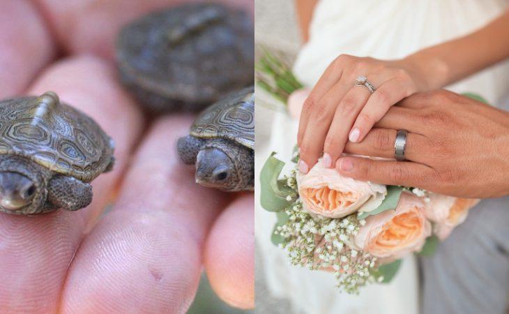 Νεόνυμφοι Κύπρος: Ζωντανά χελωνάκια για μπομπονιέρες