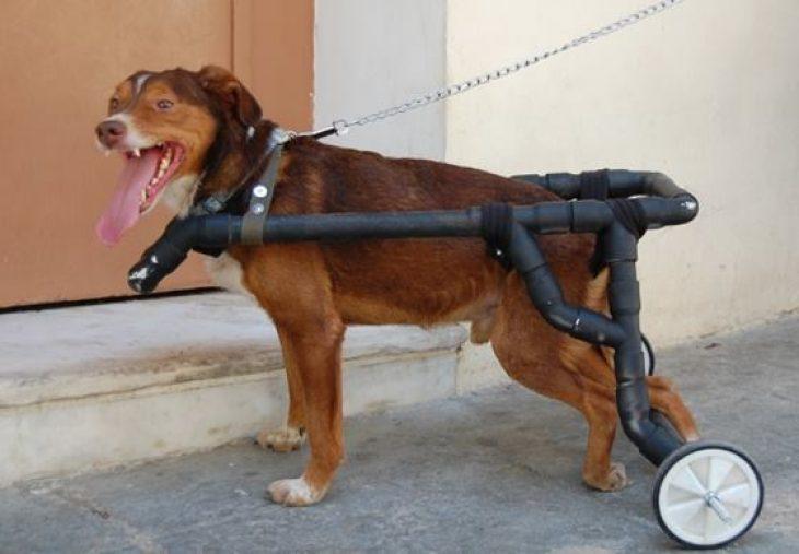 Βασίλης Τζιγκούρας: Βοηθά ανάπηρα ζωάκια να περπατήσουν