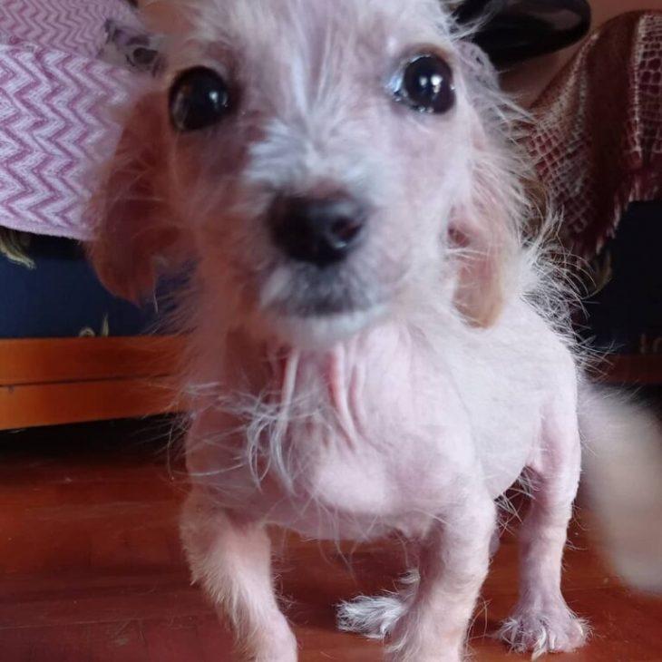 Τσίκο: Υιοθετήθηκε ο μικρός σκυλάκος από τις Σέρρες