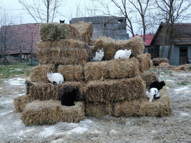 Αδέρφια από τη Ρουμανία: Έφτιαξαν καταφύγιο - Φιλοξενούν και φροντίζουν αδέσποτα ζώα