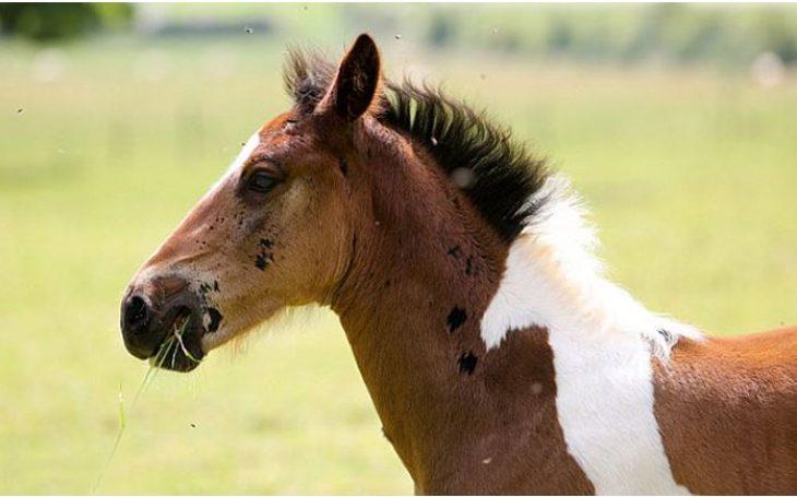 Άλογο: Έχει σχήμα αλόγου στην πλάτη και είναι ό,τι πιο όμορφο έχετε δει