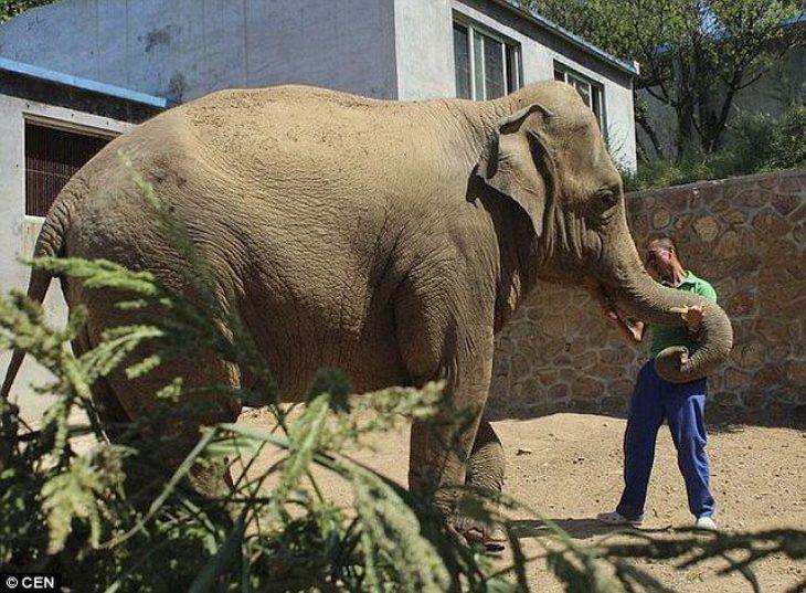 Ζώα με αισθήματα: Αυτό το ελεφαντάκι έκλαιγε για 5 ώρες όταν το πήραν από τη μητέρα του