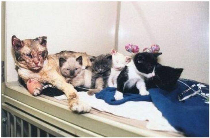 Ηρωίδα γάτα: Έσωσε τα μικρά της από τη φωτιά