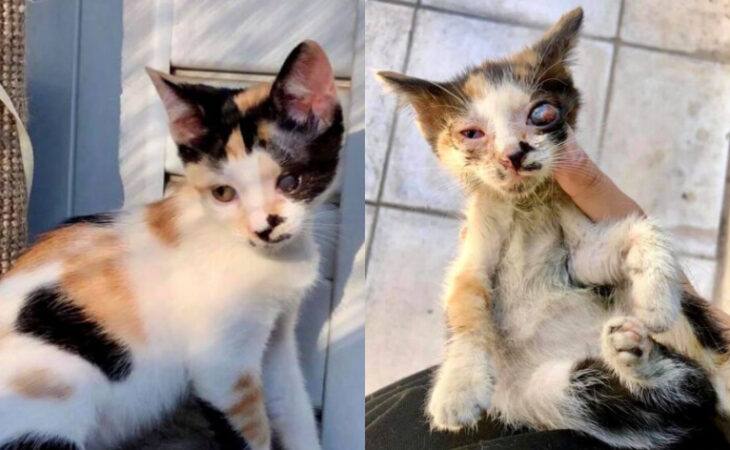 Μια ιστορία αγάπης: Ένα ημίτυφλο γατάκι που πήγαινε για ευθανασία στάθηκε τυχερό και βρήκε σπίτι