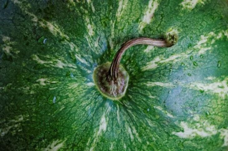 Θηλυκά καρπούζια: Όλα τα tips για να διαλέξετε το καλύτερο καρπούζι